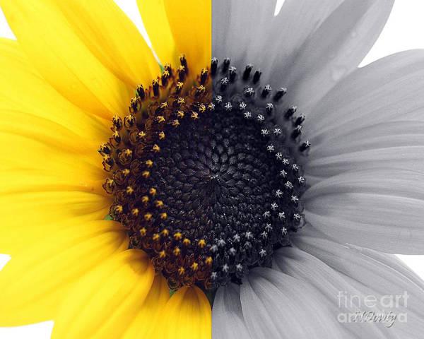 Sunflower Equinox Poster