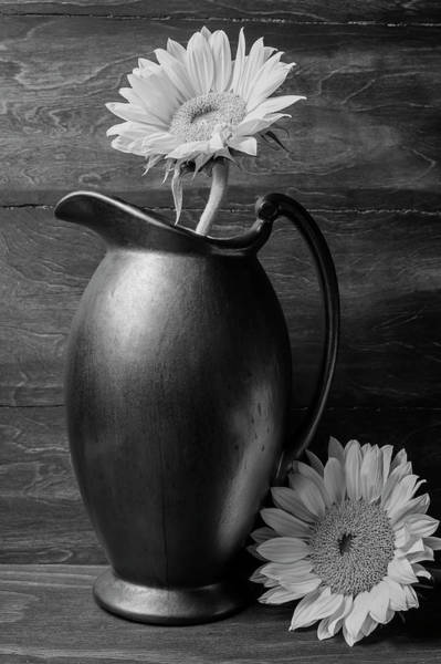 Sunflower In Pitcher Black And White Poster