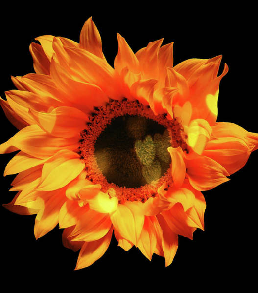 Sunflower Passion Poster