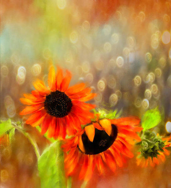 Sunflower Rain Poster