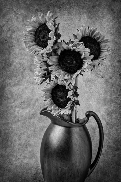 Sunflowers In Pitcher Black And White Poster