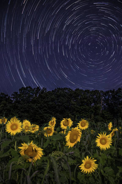 Sunflowers Under The Night Sky Poster