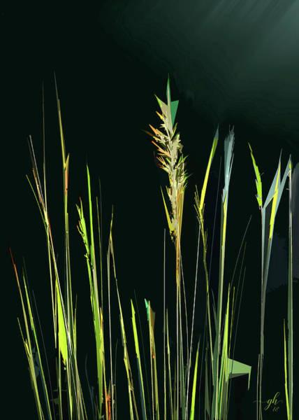 Sunlit Grasses Poster