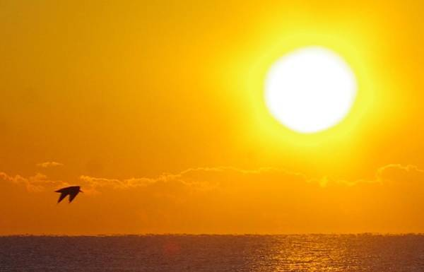Sunrise And Bird Poster