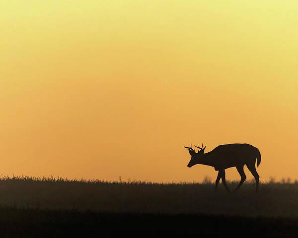 Sunrise Deer Poster