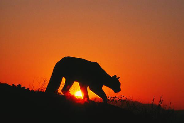 Sunrise Stalk Poster