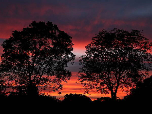 Sunset Behind Two Trees Poster