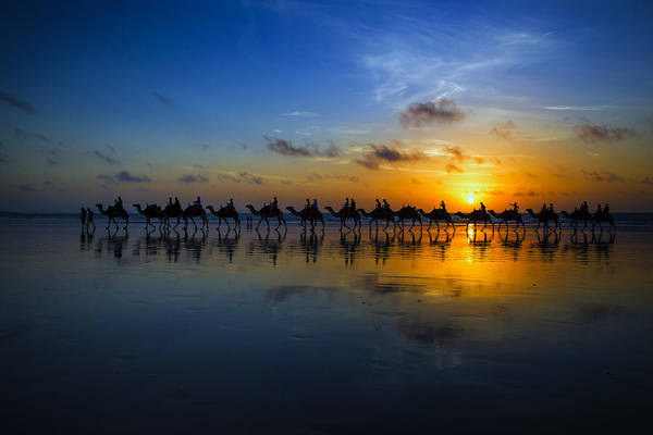 Sunset Camel Ride Poster