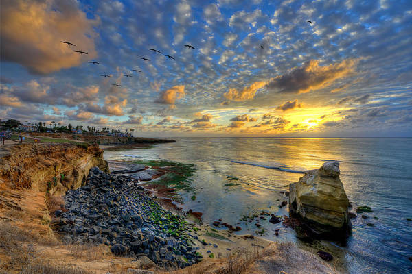 Sunset Cliffs With Brown Pelicans Poster