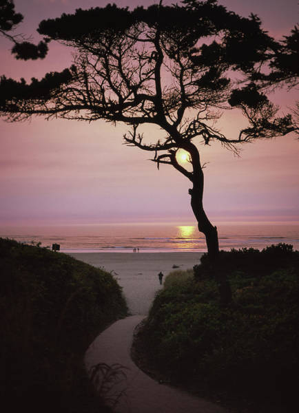 Sunset On The Zen Path Poster