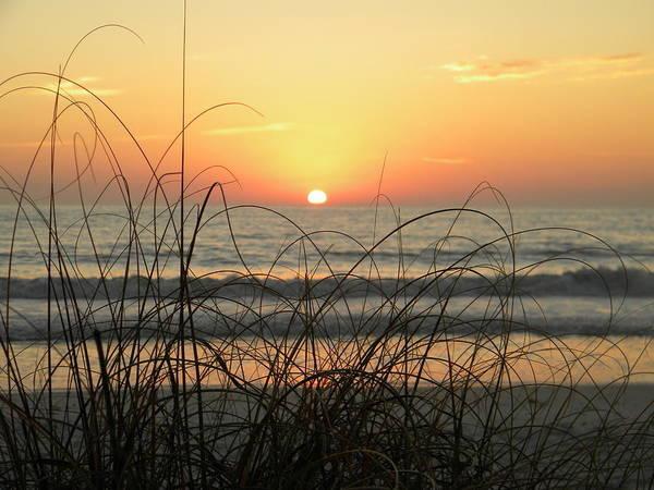 Sunset Sea Grass Poster