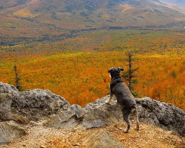 Surveying Autumn Poster