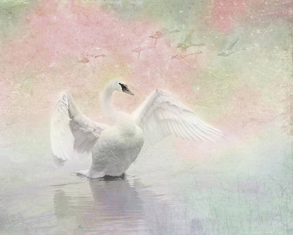 Swan Dream - Display Spring Pastel Colors Poster