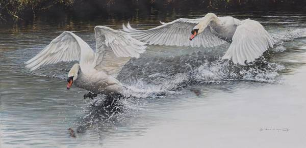 Poster featuring the painting Swans In Dispute by Alan M Hunt
