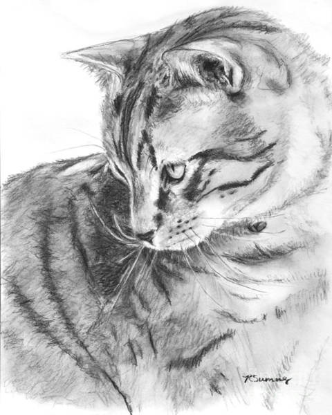 Tabby Cat In Profile Drawing Poster
