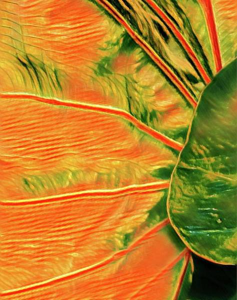 Taro Leaf In Orange - The Other Side Poster