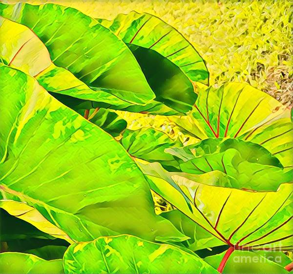 Taro Leaves In Green Poster