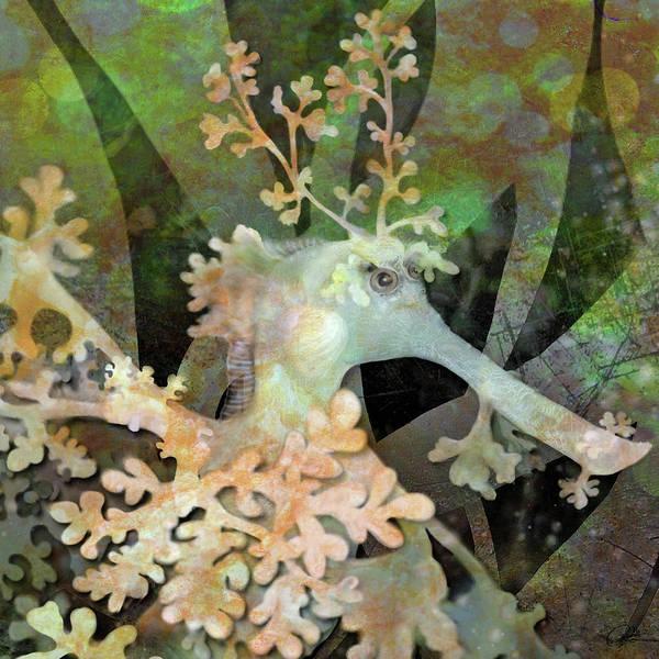 Teal Leafy Sea Dragon Poster