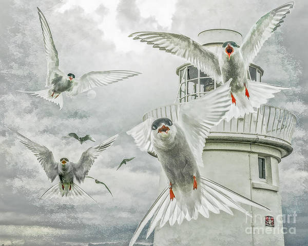 Tern Attack Poster