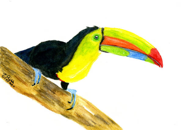Poster featuring the painting Terry Toucan by Rich Stedman