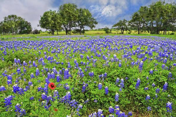 Texas Spring  Poster