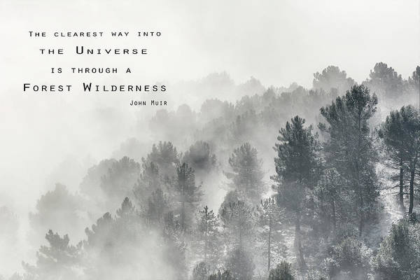 The Clearest Way Into The Universe Is Through A Forest Wilderness  John Muir Poster