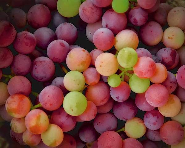 Colors Of Grapes Poster