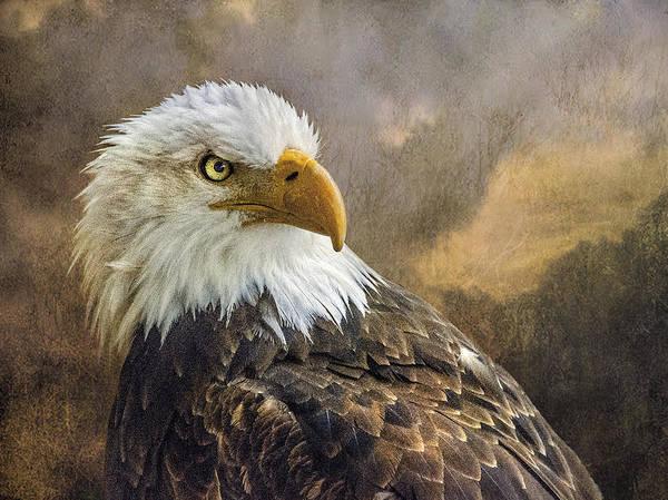 The Eagle's Stare Poster