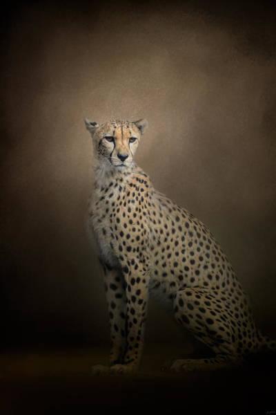 The Elegant Cheetah Poster