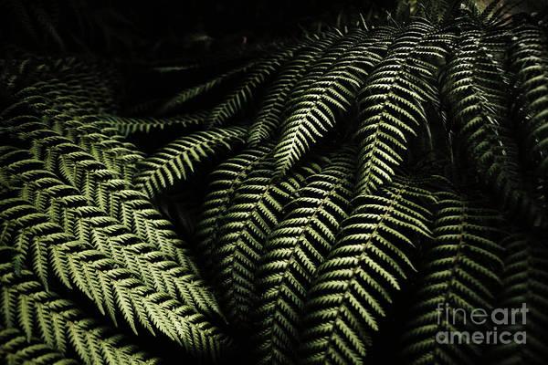 The Exotic Dark Jungle Poster