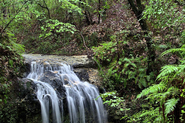 The Florida Rain Forest In Falling Waters State Park Poster
