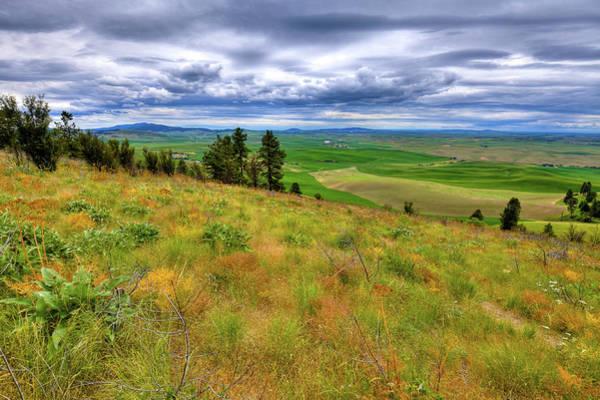 The Grasses Of Kamiak Butte Poster