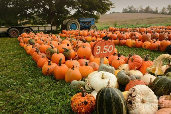 The Pumpkin Farm One Poster