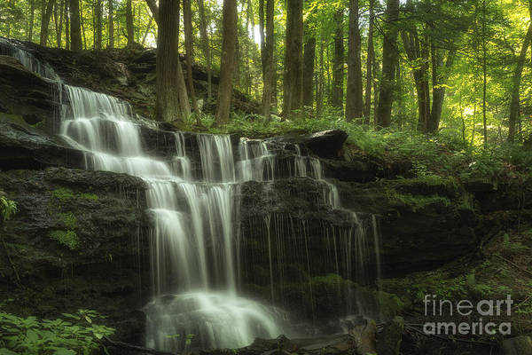 The Waterfall In The Forest Poster