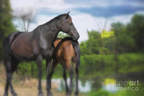 The Wild Horses Of La Chura Trail Poster