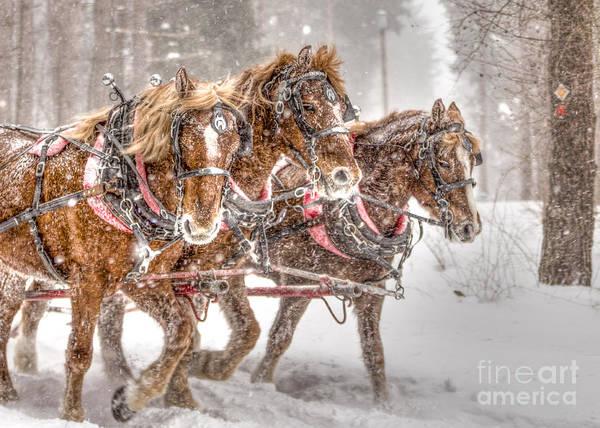 Three Horses - Color Poster