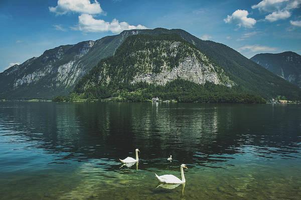 Three Lake Hallstatt Swans Poster
