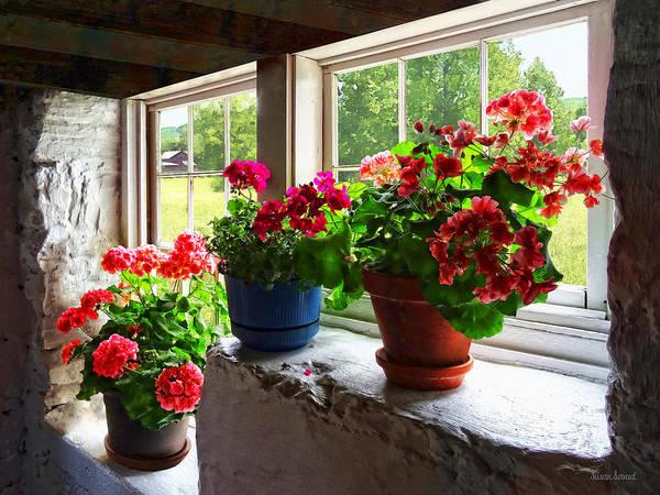 Three Pots Of Geraniums On Windowsill Poster