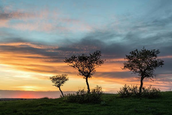 Three Trees On A Hill Poster