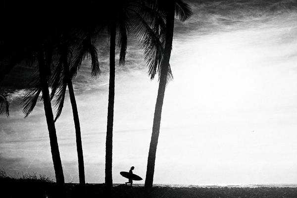 Ticla Palms Poster