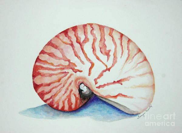 Tiger Nautilus Seashell Poster