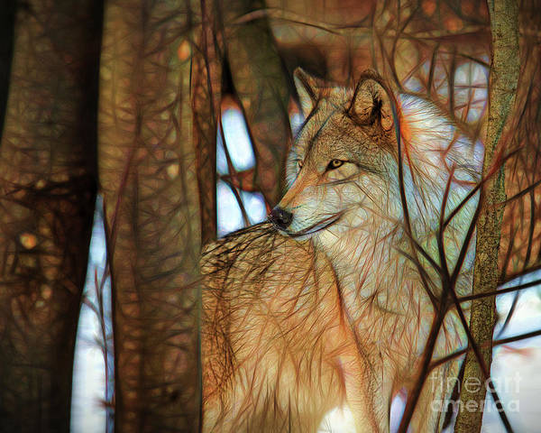 Timber Wolf Colorful Art Poster