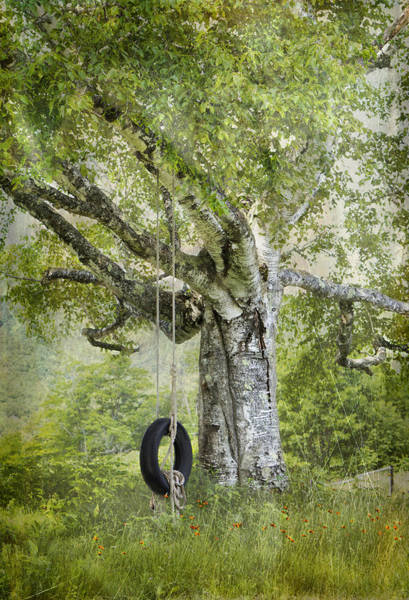 Tire Swing Hanging Off A White Birch Poster