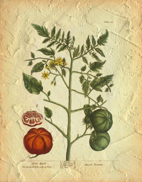 Tomato Plant Vintage Botanical Poster