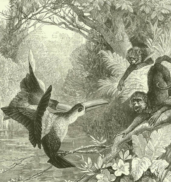 Toucans And Monkeys Poster