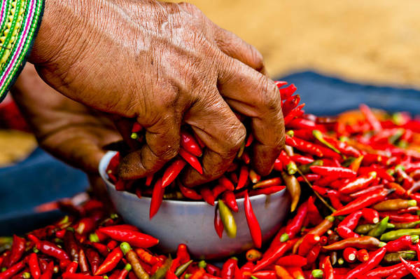 Woman Holding Red Chillies, Can Cau Market, Sapa,vietnam Poster