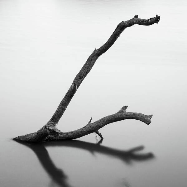 Tree Branch On The Water Poster