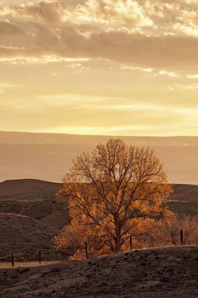 Tree In Desert At Sunset Poster