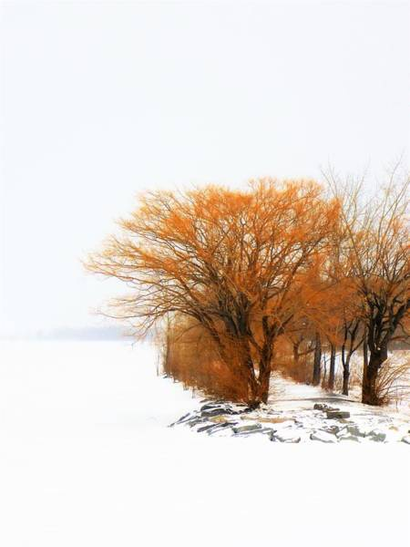 Tree In The Winter Poster