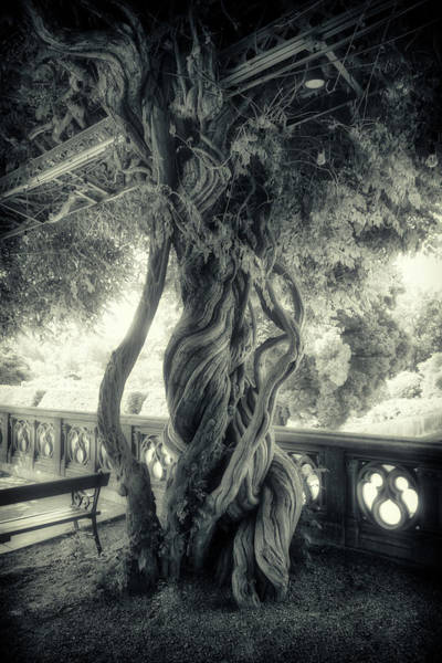 Tree Trunk Bw Series Y6693 Poster